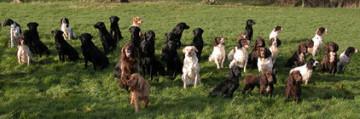 Worcestershire Gundog Society